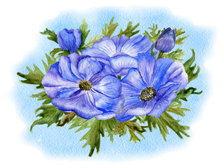 Blooming anemones on blue