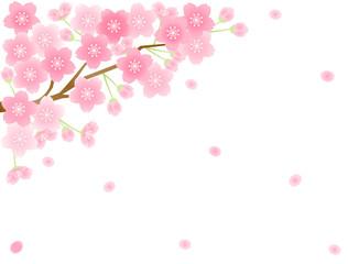 さくら14 桜