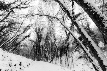 Trees with snow in winter