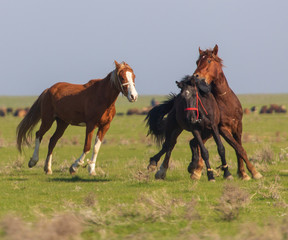 Horses graze in the steppe of Kazakhstan in spring
