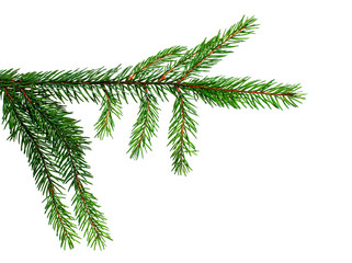 element for decoration of Christmas decor branch of green spruce on a white isolated background