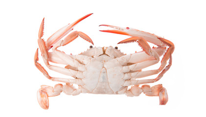 cooked crab prepared isolated on white background
