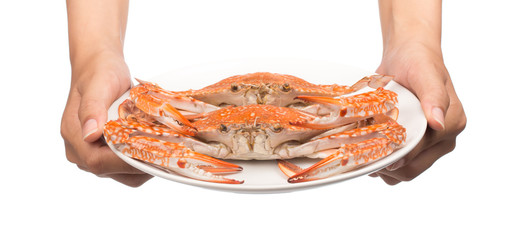 hand holding Crab on a dish isolated on white background
