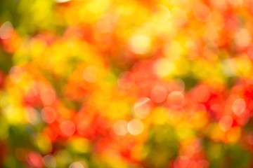 magic bright saturated blurred light for background design, overlay. The background is colorful bokeh. For a festive, seasonal design. Horizontal outdoor photo taken in the Golden autumn.
