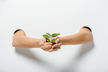 cropped image of woman holding green plant through holes on white