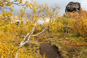 Dimmuborgir lava landscape in autumn, myvatn, Iceland