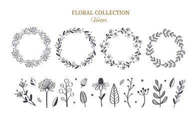 Herbal tea and floral doodle set. Vector hand drawn botanical illustration