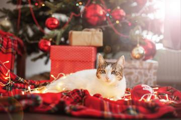 Cat near christmas tree