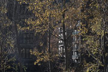 Arboles en frente de un edificio residencial en Andorra. Hojas de otoño.