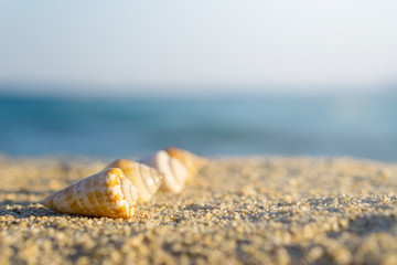 Shells arranged in line on sand at the beach. Blue sea on background
