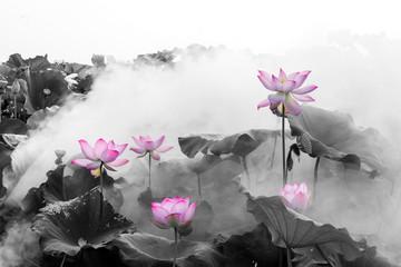 Papiers peints Fleur de lotus lotus flower blossom