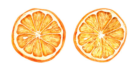 Watercolor hand drawn illustration of dried oranges.
