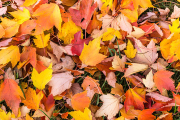 colorful leaves on the ground - autumn