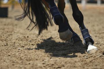 Horse legs running