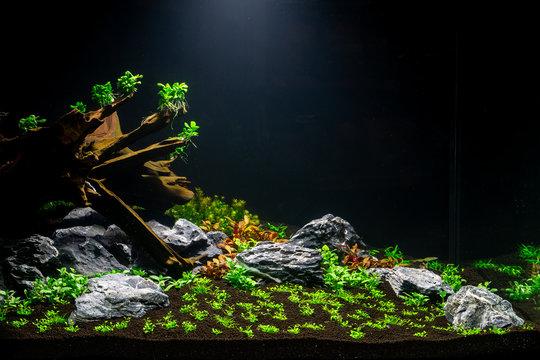 Aquascape 01