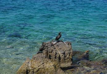 tree cormorants on a rock in the adriatic sea