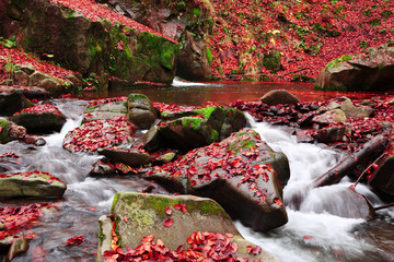 Brook in the Autumn Beech Forest