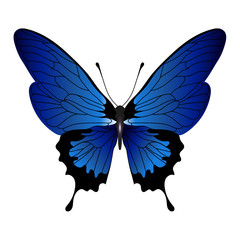 Blue color vector  butterfly isolated on white background..