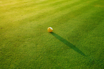 Green grass field and golf ball closed up for nature background or texture
