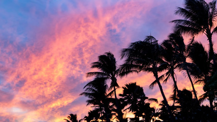 Palm tree silhouettes against colorful pink and blue sky background at sunset in tropical paradise