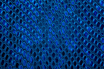 Wall Mural - Snake skin background. Blue color.