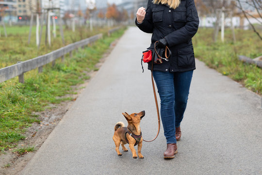 "A woman and her little dog are practicing ""walking to heel"" in the park"