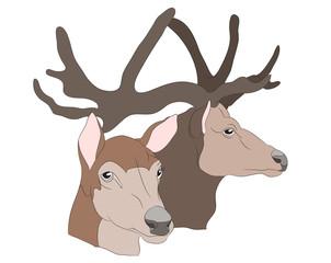 deer portrait, vector