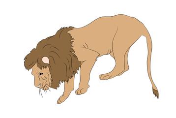 lion  vector.