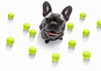Poster Crazy dog dog play tennis ball
