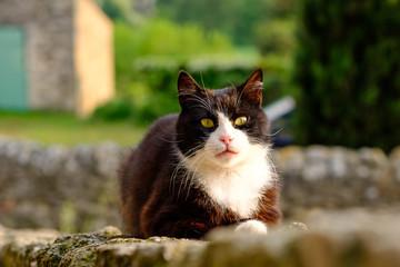 Chat noir et blanc avec les yeux jaunes gros plan dans la rue.