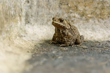 The toad are posing on the ground of cement.