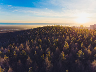 Beautiful Drone Shoot Above The Forest. snow trees.