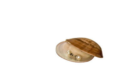 Idea for a gift. Small round pearl earrings in a sea shell on a white background with copy space.