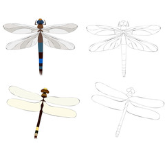 dragonfly insect, with a sketch, set