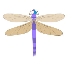 isolated, bright dragonfly, cartoon