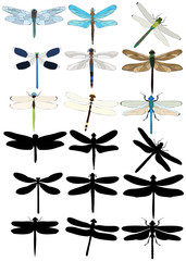 vector, isolated, dragonfly, insect, set, silhouettes