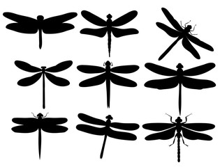 vector, isolated, silhouette dragonfly, insect, set