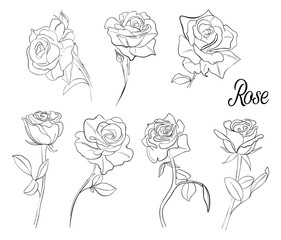 A set of sketches of roses. A variety of flowers and leaves of rose. Hand-drawn vector illustration in vintage style.Isolated design elements.