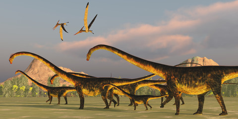 Barosaurus Dinosaur Herd - A Barosaurus dinosaur herd watches over it's youngsters as two Pteranodon reptiles fly over.