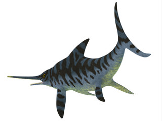 Eurhinosaurus Reptile Tail - Eurhinosaurus was a carnivorous Ichthyosaur reptile that lived in Europe during the Jurassic Period.