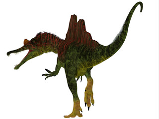 Ichthyovenator Dinosaur Tail - Ichthyovenator was a carnivorous theropod dinosaur that lived in Laos, Asia during the Cretaceous Period.