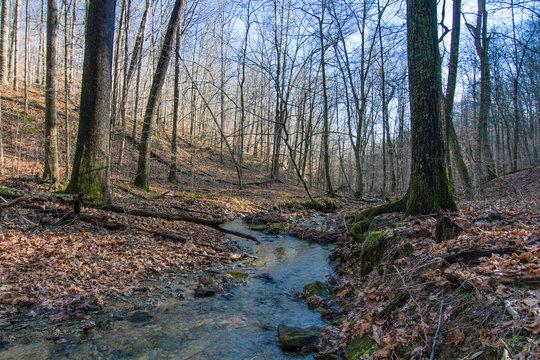 Stream through Woods