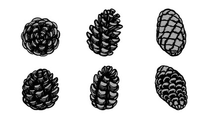Set of lace pine cones silhouette on white background.Black and white sticker vector by hand drawing