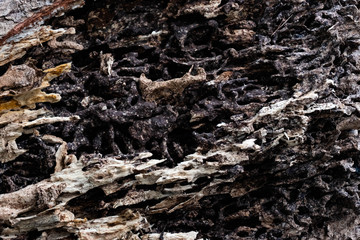 Close up texture and structure the termite nests in decaying trunk of the old falling tree