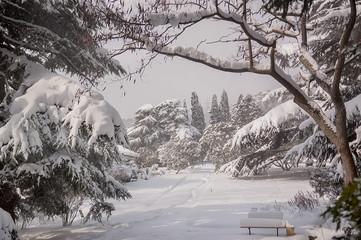 Winter park under the snow