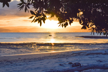 Tree leaves and the beutiful beach landscape frame a pale yellow sunset in Gisborne, New Zealand.