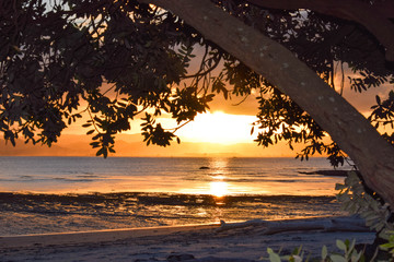 The sight of the pale sunset is framed between the tree branches and the each below in Gisborne, New Zealand.