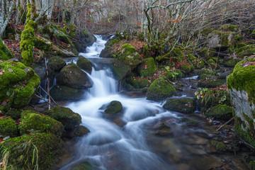 Hayedo con arroyo y rocas cubiertas de líquenes en otoño.