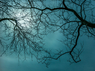 Bare thin branches of winter trees against a eery hazy sky. Wall mural