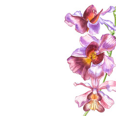 Watercolor orchid branch, hand drawn floral illustration isolated on a white background. Flora watercolor illustration, botanical painting, hand drawing.